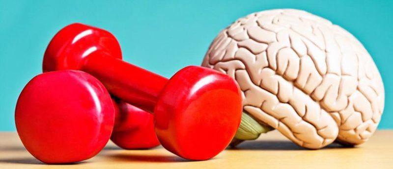 Возможен рост мозга благодаря физическим нагрузкам